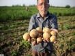 خامفروشی ، معضل فروش محصولات کشاورزی
